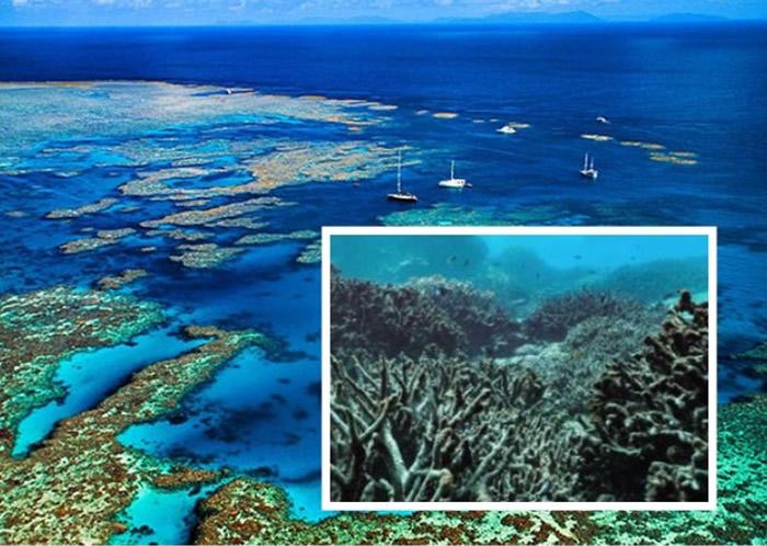 大堡礁珊瑚白化日益加剧,减少排放温室气体是唯一出路。