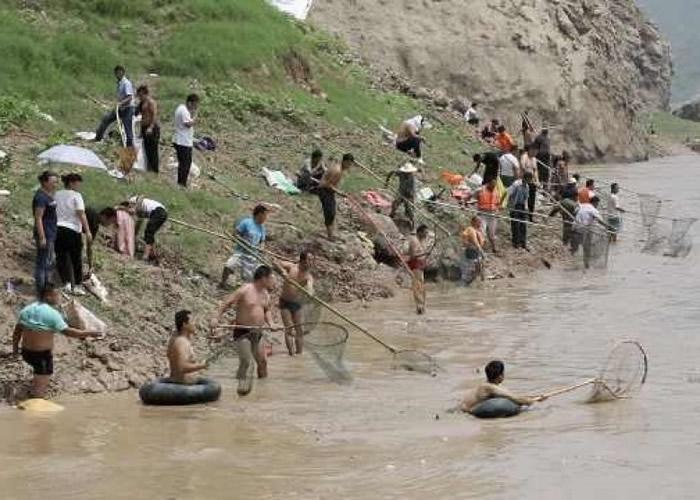 山西大批民众冒险在河中捉鱼。