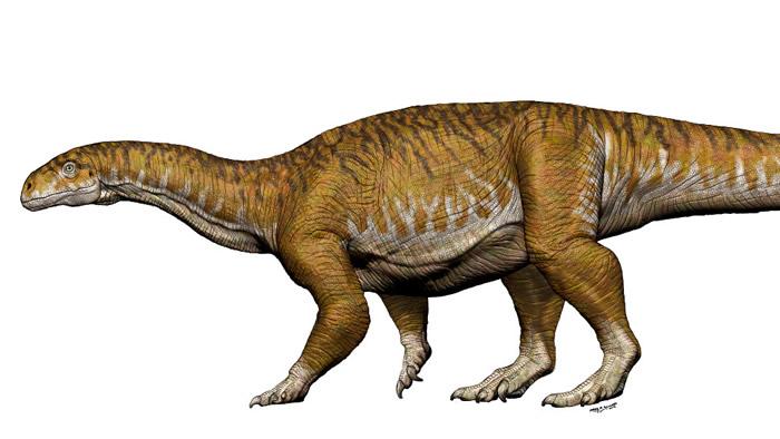 阿根廷发现最早的蜥脚类恐龙化石——生活在三叠纪晚期的Ingentia prima
