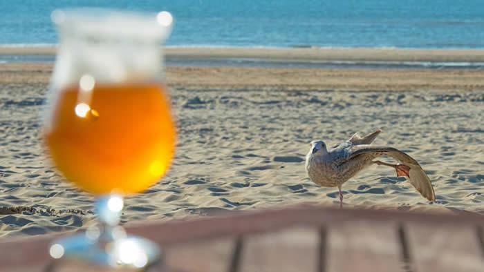 英国野生海鸥居然偷喝酒醉到边摇摆边吐