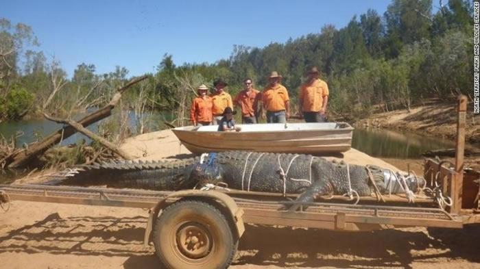 """澳大利亚600公斤大鳄鱼""""逃亡""""8年终落网"""