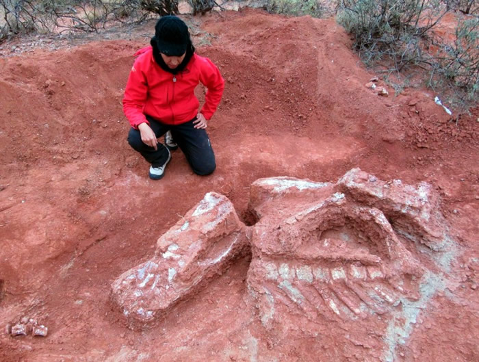阿根廷出土可能是生活于三叠纪的巨型恐龙骸骨。
