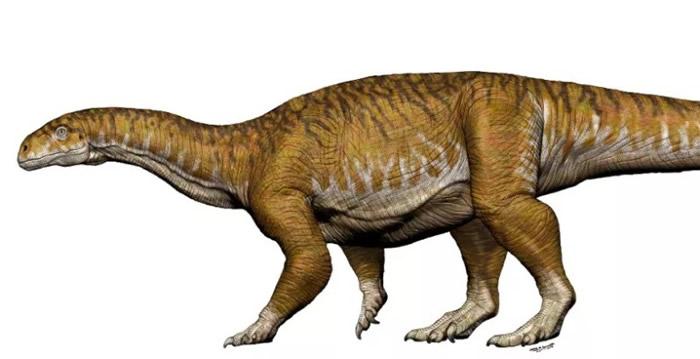 今次找到的恐龙属Ingentia prima品种。