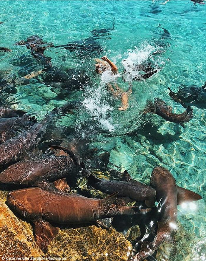 鲨鱼袭击在巴哈马拍摄的美国博主