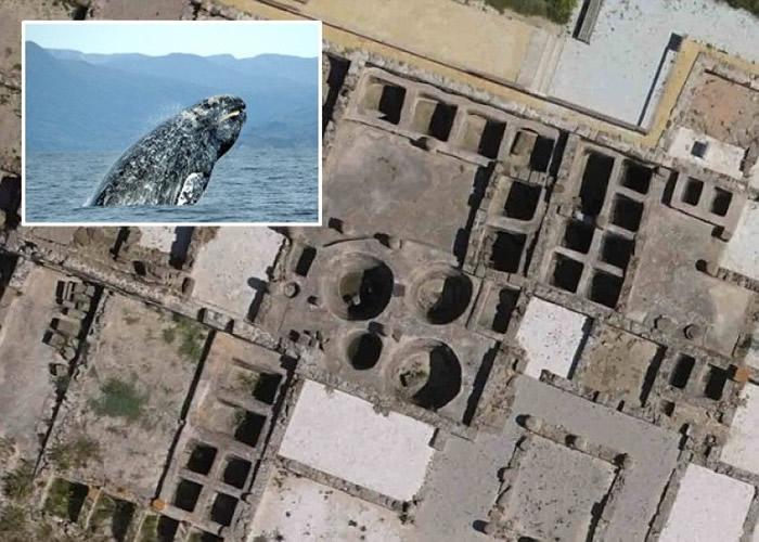 研究人员推论古罗马人曾在地中海大肆捕杀在沿岸繁殖的鲸鱼,导致鲸鱼在地中海彻底绝迹。