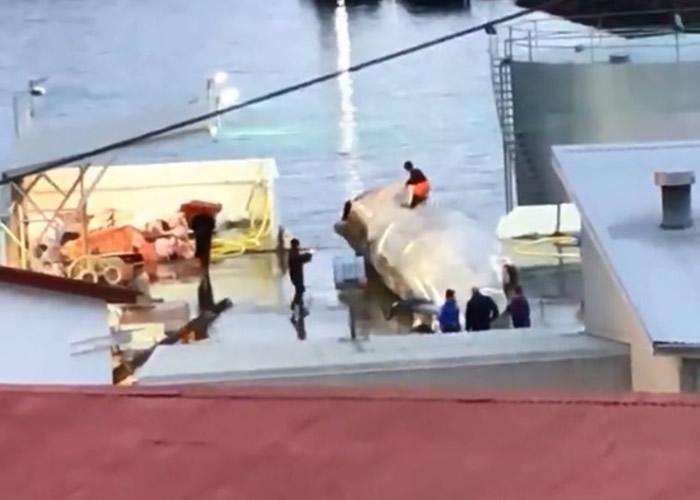 员工踩在蓝鲸身上拍照。
