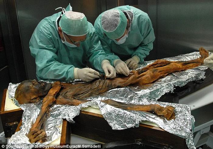 科学家还原5300年前冰人奥茨最后的晚餐:一半都是野生羊肉红鹿肉等高脂食物