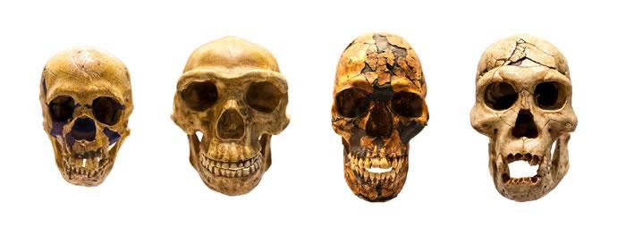 《生态与进化趋势》:早期人类由细分的、不断变化的泛非洲集合群体组成