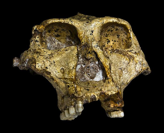214万年来的非洲东南部水文气候重建 气候变化或间接导致粗壮傍人灭绝