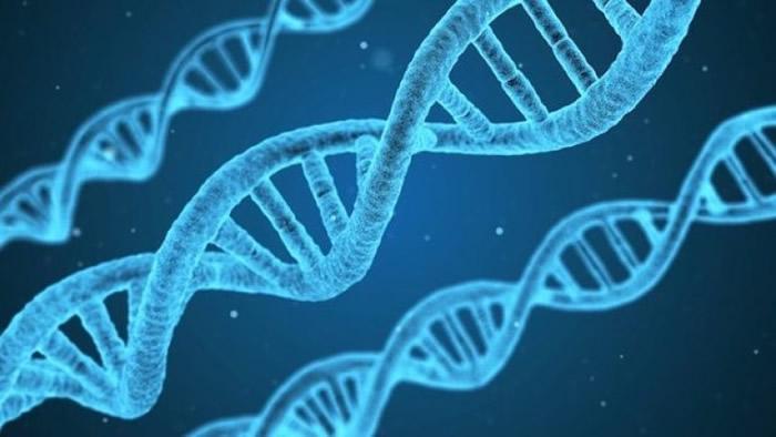 DNA某程度上影响人的成就。