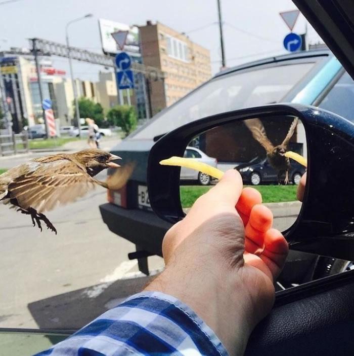男子透过车窗喂麻雀吃薯条的照片走红:镜里镜外鸟的翅膀方向竟然不同