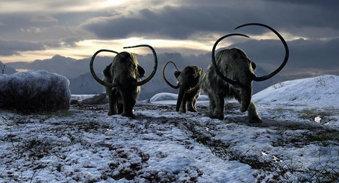 俄罗斯哈卡斯共和国发现可能属于80-40万年前的真猛犸象的祖先骸骨化石