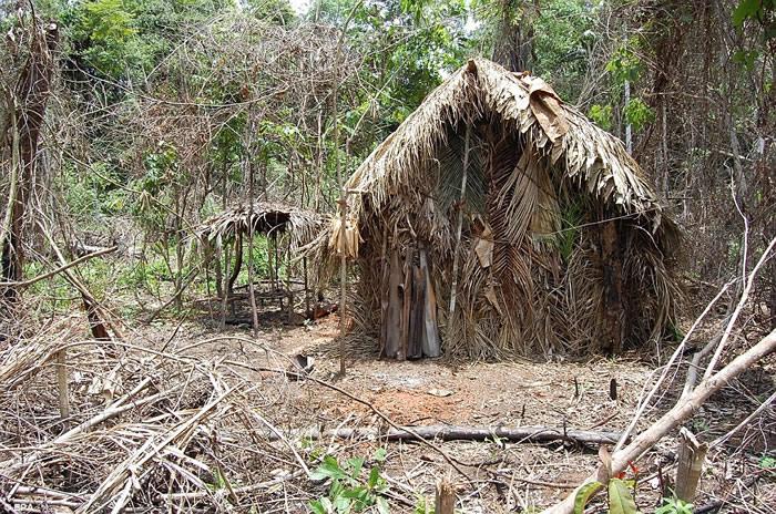 巴西亚马逊森林部族20年前险被灭族 最后1名男土著被拍到在砍树