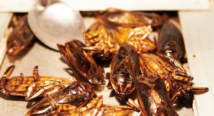 美国威斯康星大学麦迪逊分校新研究发现食用昆虫有益肠道健康