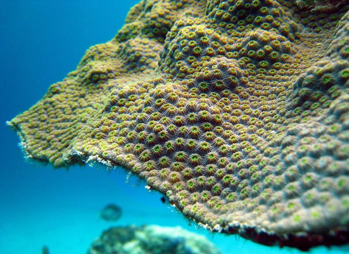 《当代生物学》:遗传学家研究发现现代珊瑚与恐龙同龄