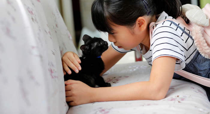 《应用动物行为科学》:匈牙利研究人员揭示为何猫咪更喜欢女性