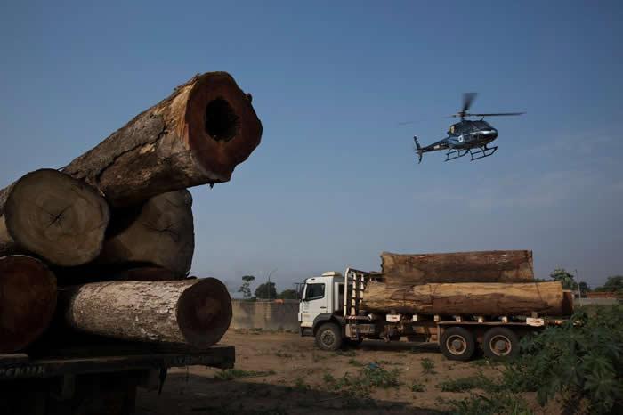 非法盗伐依旧是亚马逊地区的重大威胁。这张照片中,载着盗采雨林树木的卡车,被巴西环境保护单位给拦了下来。 PHOTOGRAPH BY LALO DE ALMEID