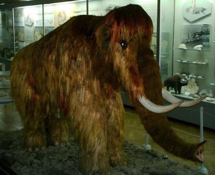俄罗斯人出售世界上唯一一顶用猛犸象毛做的帽子