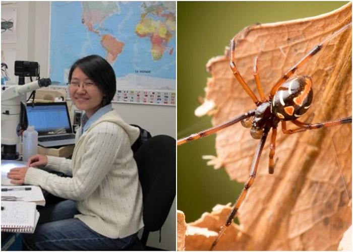 王义夫(左图)研究发现,愈来愈多黑寡妇蜘蛛北移。