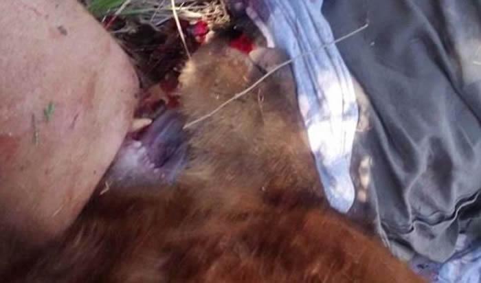 美国新墨西哥州男子遛狗遭大熊袭击 砍熊头脱困