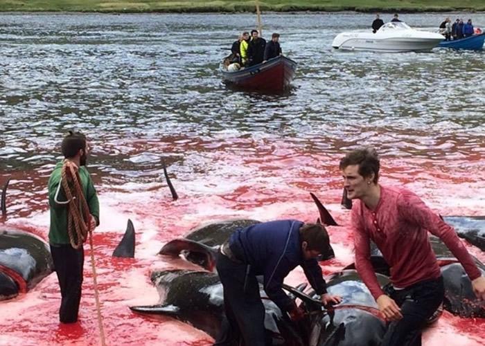 当地居民正分享鲸鱼肉。