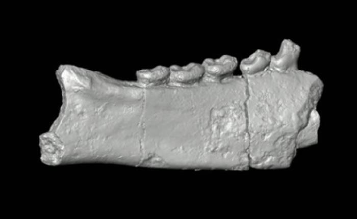 """""""果蝠""""化石揭示狐猴最早登陆马达加斯加的方式"""