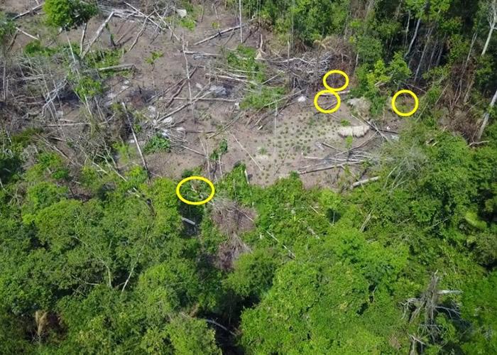 片段中见一批土著(黄圈)在丛林和种了木薯的土地上活动。