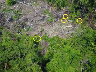 航拍机首次拍下公开巴西偏远部落土著生活状况