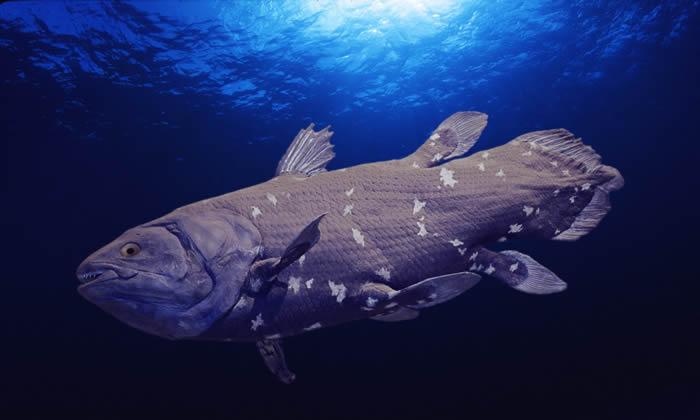意大利能源公司计划在南非海域开采石油 威胁腔棘鱼栖息地
