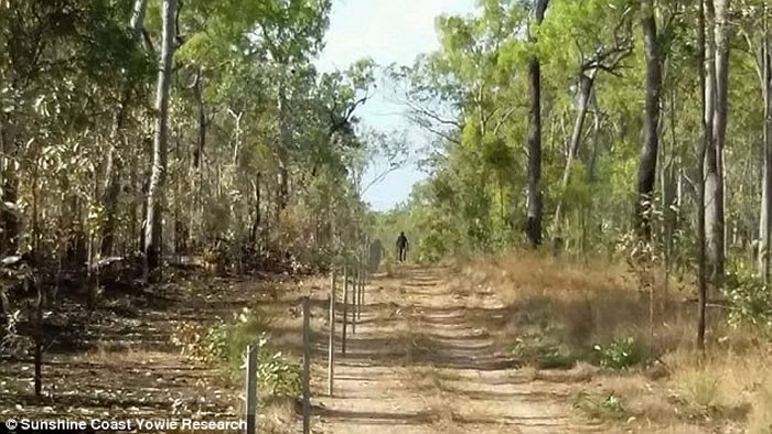 """澳大利亚尼姆宾镇女子称看到与雪人有亲缘关系的巨大灵长类生物""""幽威"""""""