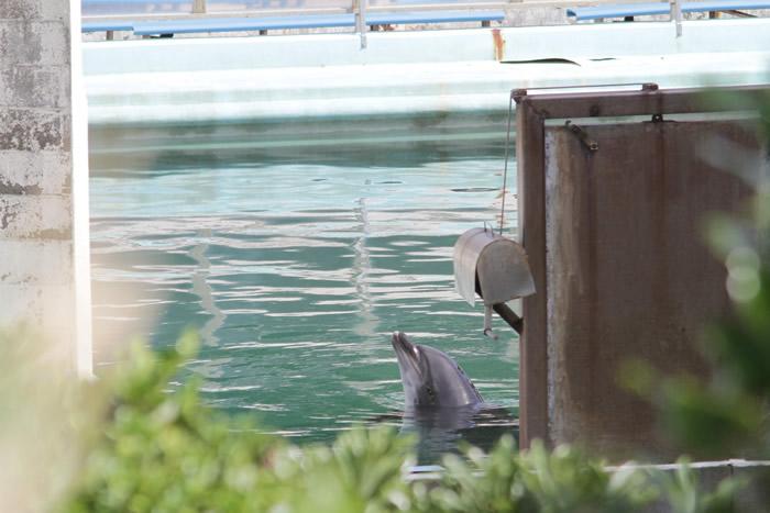 日本千叶县铫子市犬吠埼海洋公园无预警关门 海豚和企鹅等海洋生物被遗弃