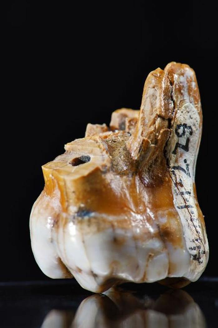 科学家仅仅从三颗牙齿和一截小指骨就析取出我们关于丹尼索瓦人的一切知识。 PHOTOGRAPH BY ROBERT CLARK, NATIONAL GEOGRAP