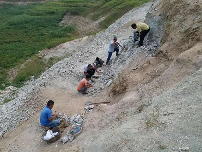 渑池上河曙猿遗址2个化石点发现犀牛、鳄鱼、貘以及各种藻类化石1000余件