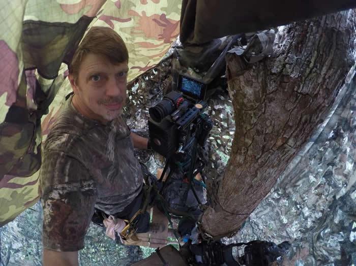 摄影师提姆.雷曼在哈拉巴拉野生动物保留区高高的树冠层上搭了掩蔽帐,监看一棵结果的榕树,希望盔犀鸟会来这里觅食。 PHOTOGRAPH BY TIM LAMAN