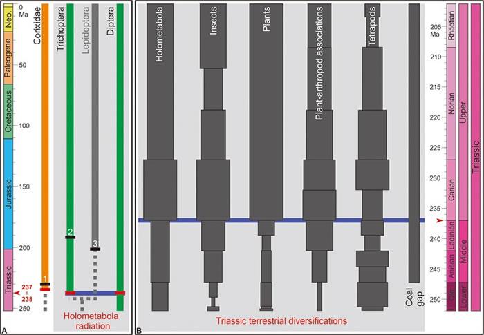 中三叠世全变态昆虫演化和三叠纪陆地生物复苏