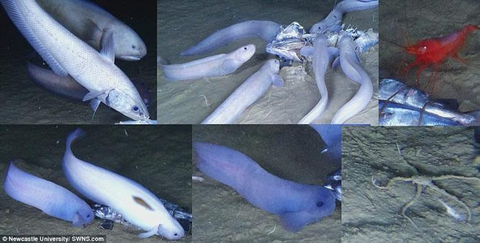 太平洋东南部阿塔卡马海沟(秘鲁─智利海沟)7千米深海