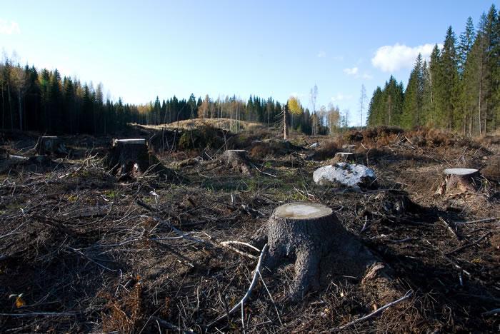 由商品驱动的森林总体丧失速度占全球范围内森林砍伐的四分之一以上