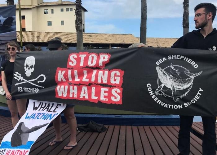 环保人士在国际捕鲸委员会年会举行期间,发起抗议行动。