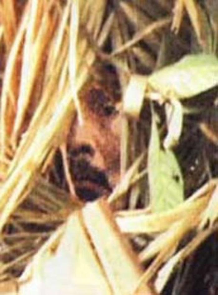 这张放大截图取自2009年的纪录片《科伦比亚拉:他们对印地安人开枪,对吧? 》(暂译,原文片名为Corumbiara: They Shoot Indians,