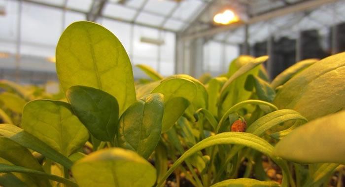 美国和日本研究人员发现植物可能借助类似动物的神经系统传递危险信息