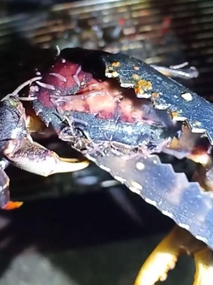 螃蟹放在火上烤 身上竟冒出一条条蠕动的长条型生物