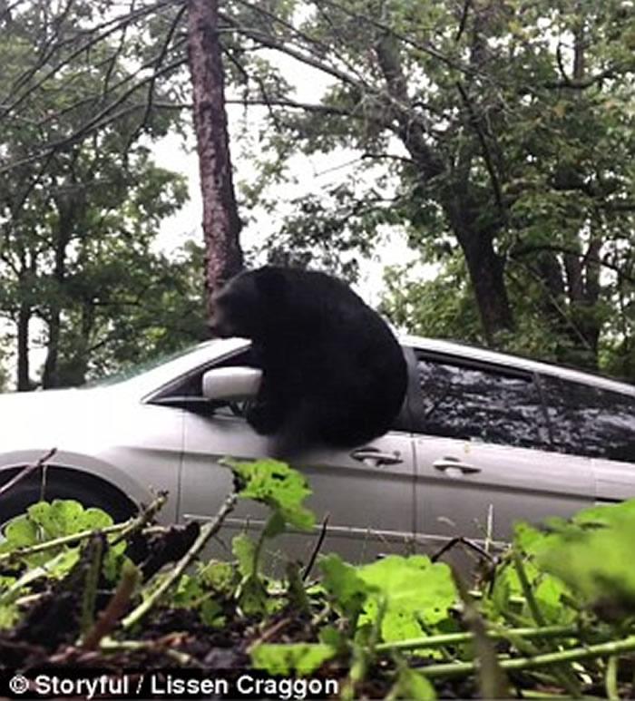 美国北卡罗莱纳州男子取车时发现座驾内竟然藏了只黑熊 破窗而出吓坏人