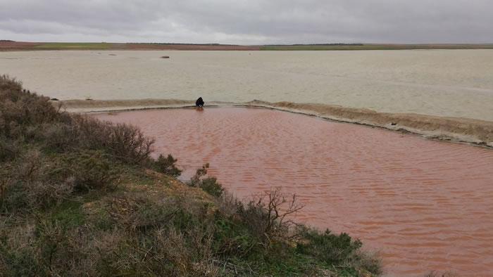 """西班牙""""蒂列斯""""盐湖发现能在火星上生存的藻类——盐生杜氏藻和忠清南道盐单胞菌"""