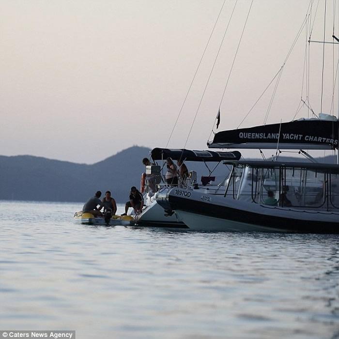澳大利亚一名女子在圣灵群岛遭到鲨鱼袭击
