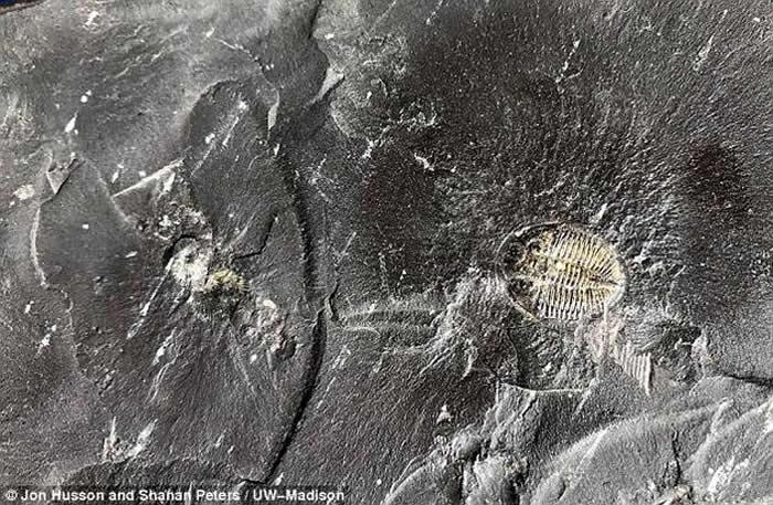 地球早期生命在寒武纪的大爆发可能不是由5亿年前的小行星撞击引起