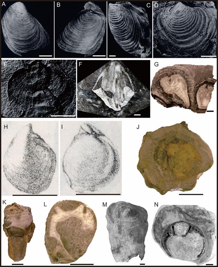 印度板块及拉萨板块晚中生代低纬度和高纬度分布双壳类化石