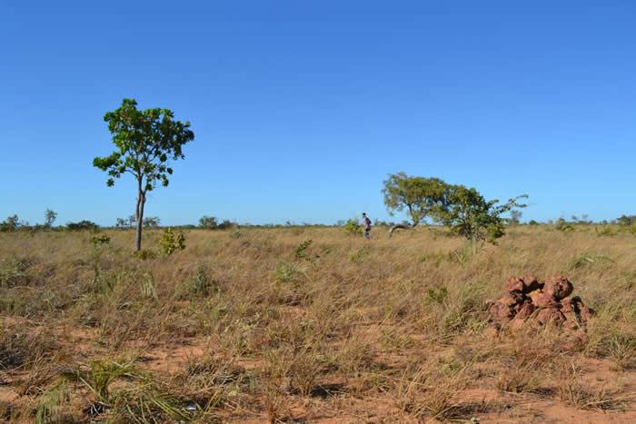 保护亚马逊雨林政策有效阻止森林砍伐 却将环境压力转移到邻近生态系统