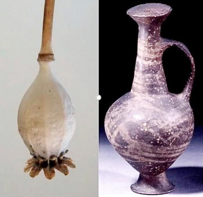 环形底座水瓶(右)外型如鸦片罂粟种子(左)。
