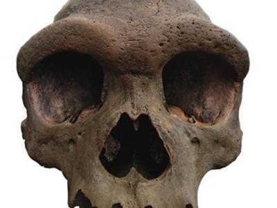 中国发现的海德堡人化石将推动现代人起源和演化的研究取得重大进