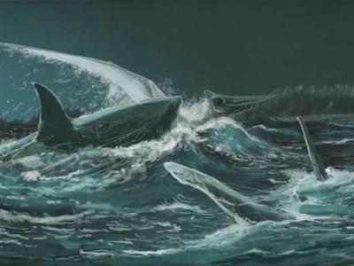这不是电影画面!8300万年前史前鲨鱼曾猎食翼龙